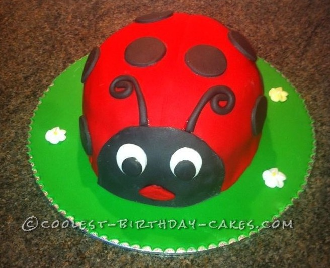Coolest Ladybird Cake