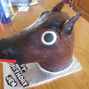 Feeling a Little Horse
