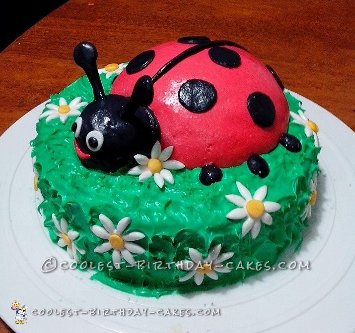 Coolest Ladybug Cake for Daughter's 1st Birthday