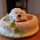 Shaggy Puppy Cake