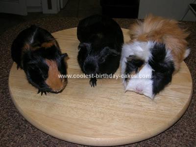 guinea-pig-cake-03b