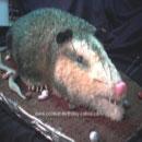 Possum Birthday Cakes